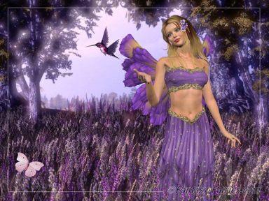 lavender_fairy01.jpg